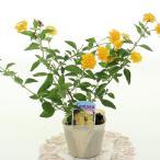 花の苗 ランタナ 3号ポット ※花色おまかせ