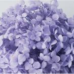 Yahoo!はなどんやアソシエ大特価 即日  プリザーブド みちのくあじさいや みちのくアナベル ラベンダー DFFFF811-08 あ行 あじさい 紫陽花