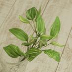 大特価 即日  造花 YDM ミニトラディスカンティアブッシュ FG4601-GR 造花葉物 トラディスカンティア