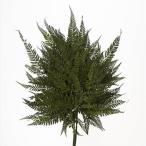 ドライ 大地農園 ヒメワラビ 20枚 グリーン 50330-700 02  /  / プリザーブドフラワー 花材 大地農園:ドライフラワー ナチ