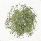 即日  ドライ 大地農園 スパニッシュモス 小袋 50g グリーン 61061-700 00   ドライ葉物 モス 苔