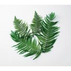 即日  ドライ 大地農園 ウラジロ 5枚 グリーン 04220-700 ドライ葉物 葉物