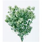 即日  ドライ 大地農園 オレガノ ケントビューティー 10g N 14040-000 00   ドライフラワー花材 その他ドライフラワー