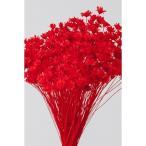 即日  ドライ 大地農園 スターフラワー ミニ レッド 12g 30194-321 ドライフラワー花材 スターフラワー