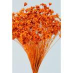 大特価 即日  ドライ 大地農園 スターフラワー ミニ オレンジ 12g 30194-351 ドライフラワー花材 スターフラワー