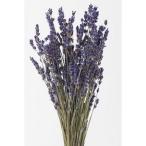 ドライ 即日★大地農園 ラベンダー イタリー N 30g 10040-000 00   ドライフラワー花材 ラベンダー
