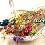 即日   ドライ 大地農園 SAデージー 26g  9色  はなどんやオリジナルアソート ドライフラワー花材 シルバーデージー