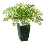 人工観葉植物 アジアンタム  器タイプ:Pスクエア BK   99188※器タイプを必ずご確認ください 07  日限定  造花 人工樹木・観葉植物 サ〜ソ その他