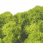 プリザーブド ノルディックモス 50g ライトグリーン 50g FL820-77 02  /  / プリザーブドフラワー 花材 モス、コケ その他のモス、コケ