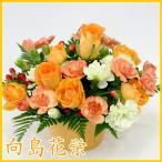 ショッピング誕生日 ビーンズポット・オレンジ  誕生日 記念日 お祝い