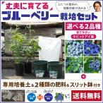 ◆送料無料◆ ブルーベリー 苗木 【2品種選べる 簡単! 丈夫に育てる ブルーベリー 栽培セット】※北海道・沖縄は送料無料適用外です。