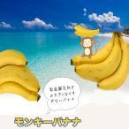 バナナの木 ドワーフモンキーバナナ ポット苗 沖縄県産熱帯果樹 予約販売4月下旬頃入荷予定