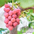 ブドウ 苗木 クイーンニーナ新品種! 甘くて大粒の赤ぶどう
