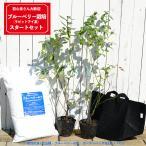 初心者用 ブルーベリー 簡単スタートセット ラビットアイ系 苗木 2本 ブルーベリーの土 ガーデンバッグの簡単スタートセット