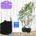 ブルーベリー 苗木 ノーザンハイブッシュ系 苗2本 ブルーベリーの土 ガーデンバッグの簡単スタートセット