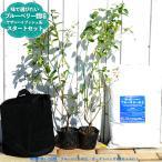 ブルーベリー 苗木 サザンハイブッシュ系 苗2本 ブルーベリーの土 ガーデンバッグの簡単スタートセット