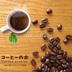 珍しい 観葉植物コーヒーの木 (ブルーマウンテン)ポット苗 果樹 果樹苗 観葉植物 coffee インテリアグリーン
