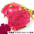 沖縄産ドラゴンフルーツ 赤肉 ポット苗 ドラゴンフルーツ 苗 果樹 熱帯果樹 予約販売2017年7月中旬頃お届け予定