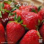 いちご 苗 恋みのり 3号ポット苗 イチゴ 苺予約販売2018年9月〜10月以降お届け予定