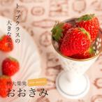 いちご 苗 おおきみ 3号ポット苗 イチゴ 苺