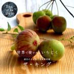 イチジク 苗木 キング 2年生苗 果樹 果樹 世界のイチジク