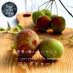 イチジク 苗木 ロングドゥート (バナーネ) 2年生苗 果樹 果樹 世界のイチジク