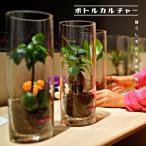 観葉植物 4本セット ボトルカルチャー ( インテリアグリーン ) 選べる2タイプ クリスマス/水耕栽培/ギフト/新築祝い/引っ越し祝い/開店祝い代引き不可