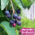 ジューンベリー 矮性ジューンベリー リージェント ポット苗 矮性 果樹 果樹苗