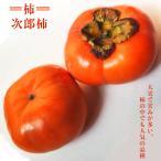 柿 ( カキ ) 苗 次郎柿 1年生 接ぎ木 苗 果樹 果樹苗
