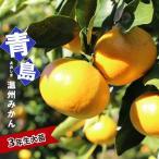 みかん 苗木 青島温州みかん 3年生 接ぎ木 大苗 産地で剪定済 1.0m苗 果樹苗 果樹 柑橘