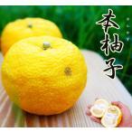 ゆず 苗木 本柚子(ほんゆず) 木頭ゆず(きとうゆず)2年生 接ぎ木 柑橘 果樹 果樹