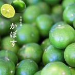 オレンジ 苗木 カボス 2年生 接ぎ木 苗 柑橘 果樹 果樹