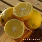 柑橘類 苗木 柑橘スイートレモネード2年生 接ぎ木 果樹 果樹苗