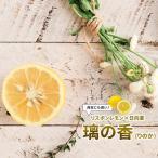 レモンの木璃の香 (りのか) 1年生 接ぎ木 苗 果樹苗 レモン
