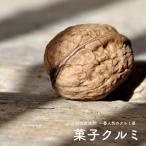 クルミ 苗木 菓子くるみ ( カシクルミ ) 1年生苗 果樹 果樹