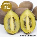 キウイ 苗木 東京ゴールド (メス) 1年生 接ぎ木 果樹 果樹苗 つる性 落葉樹 Kiwi