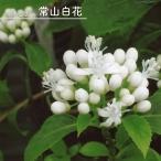アジサイ 常山白花 3.5号ポット苗 ハナヒロバリュー