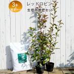 生垣用セット レッドロビン スカーレットパール長さ1m分の生垣セットレッドロビン苗×3本と花ひろば堆肥『極み』×1袋