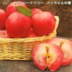 りんご 苗木 バレリーナツリー メイちゃんの瞳 1年生 接ぎ木 苗 果樹 果樹 リンゴ
