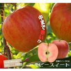 リンゴ ルビースイート 1年生 接ぎ木 苗 果樹 果樹苗 りんご 鉢植え 木