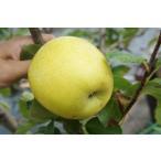 肉質よく外観の優れた黄色リンゴ♪