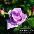 バラ苗 つるブルームーン 1年生 新苗 つるバラ 青紫色 強香 バラ 苗 つるばら ブルー系 フルーツ系