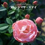 バラ苗 オレンジマザーズデイ (ミニバラ) 国産苗 1年生 新苗 四季咲き オレンジ色 バラ 苗