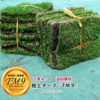 芝生 鳥取県産 高麗芝 TM9 (ティーエムナイン) 2束セット 生産販売