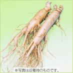 山菜・朝鮮(高麗)人参の苗