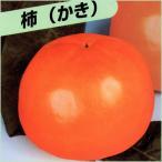 甘柿(カキ)苗木 いさはや柿【お取り寄せ品】