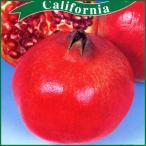 ザクロ苗木 カリフォルニア・ザクロ