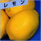 檸檬(レモン)の苗木 リスボンレモン