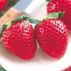 苺(イチゴ) 女峰(にょほう)の苗