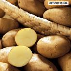 ジャガイモ・メークインの種芋(1kg)